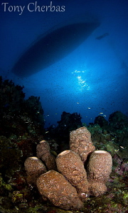 Sponge patch under the boat in the early AM. by Tony Cherbas 